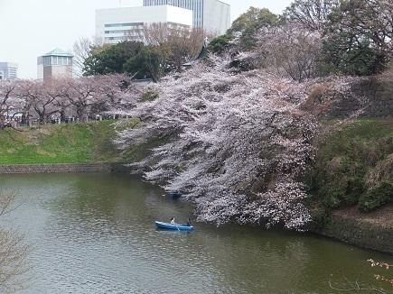 20130320_chidorigafuchi.JPG