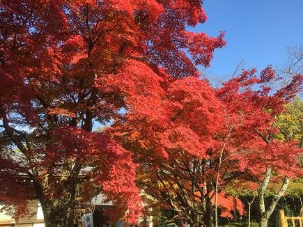 20141122_京都.JPG